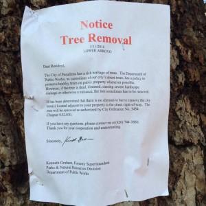 City of Pasadena Tree Removal Notice